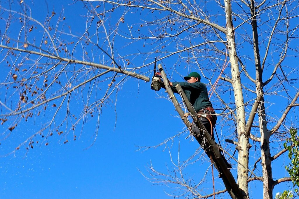 Contact Us-Dania Beach FL Tree Trimming and Stump Grinding Services-We Offer Tree Trimming Services, Tree Removal, Tree Pruning, Tree Cutting, Residential and Commercial Tree Trimming Services, Storm Damage, Emergency Tree Removal, Land Clearing, Tree Companies, Tree Care Service, Stump Grinding, and we're the Best Tree Trimming Company Near You Guaranteed!