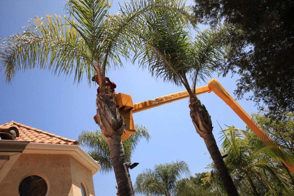 Palm Tree Trimming-Dania Beach FL Tree Trimming and Stump Grinding Services-We Offer Tree Trimming Services, Tree Removal, Tree Pruning, Tree Cutting, Residential and Commercial Tree Trimming Services, Storm Damage, Emergency Tree Removal, Land Clearing, Tree Companies, Tree Care Service, Stump Grinding, and we're the Best Tree Trimming Company Near You Guaranteed!