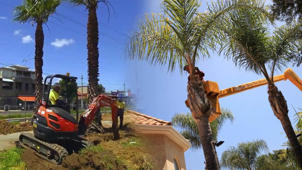 Palm tree trimming & palm tree removal-Dania Beach FL Tree Trimming and Stump Grinding Services-We Offer Tree Trimming Services, Tree Removal, Tree Pruning, Tree Cutting, Residential and Commercial Tree Trimming Services, Storm Damage, Emergency Tree Removal, Land Clearing, Tree Companies, Tree Care Service, Stump Grinding, and we're the Best Tree Trimming Company Near You Guaranteed!