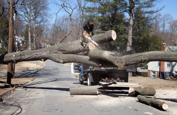 Residential Tree Services-Dania Beach FL Tree Trimming and Stump Grinding Services-We Offer Tree Trimming Services, Tree Removal, Tree Pruning, Tree Cutting, Residential and Commercial Tree Trimming Services, Storm Damage, Emergency Tree Removal, Land Clearing, Tree Companies, Tree Care Service, Stump Grinding, and we're the Best Tree Trimming Company Near You Guaranteed!