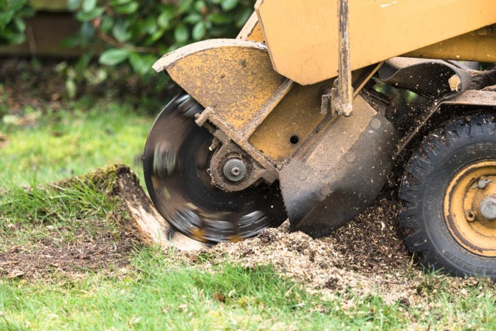 Stump Grinding-Dania Beach FL Tree Trimming and Stump Grinding Services-We Offer Tree Trimming Services, Tree Removal, Tree Pruning, Tree Cutting, Residential and Commercial Tree Trimming Services, Storm Damage, Emergency Tree Removal, Land Clearing, Tree Companies, Tree Care Service, Stump Grinding, and we're the Best Tree Trimming Company Near You Guaranteed!