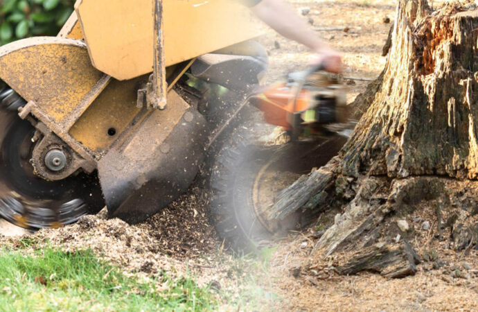 Stump grinding & removal-Dania Beach FL Tree Trimming and Stump Grinding Services-We Offer Tree Trimming Services, Tree Removal, Tree Pruning, Tree Cutting, Residential and Commercial Tree Trimming Services, Storm Damage, Emergency Tree Removal, Land Clearing, Tree Companies, Tree Care Service, Stump Grinding, and we're the Best Tree Trimming Company Near You Guaranteed!