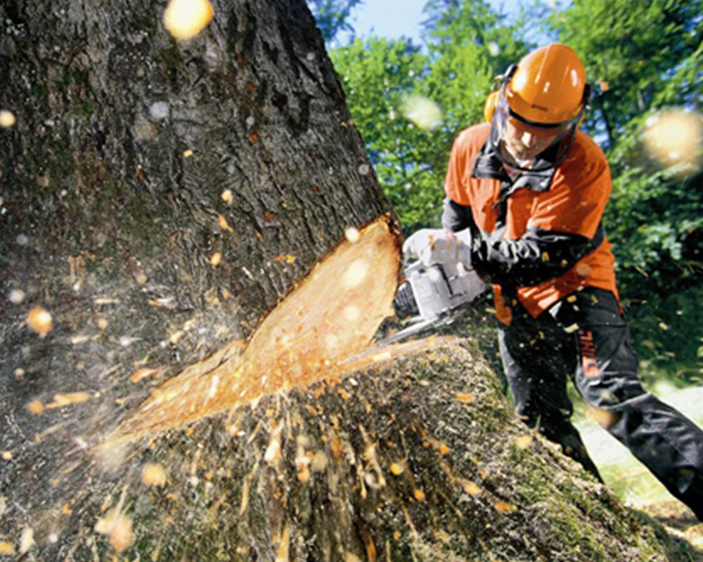 Tree Cutting-Dania Beach FL Tree Trimming and Stump Grinding Services-We Offer Tree Trimming Services, Tree Removal, Tree Pruning, Tree Cutting, Residential and Commercial Tree Trimming Services, Storm Damage, Emergency Tree Removal, Land Clearing, Tree Companies, Tree Care Service, Stump Grinding, and we're the Best Tree Trimming Company Near You Guaranteed!