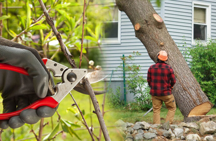 Tree pruning & tree removal-Dania Beach FL Tree Trimming and Stump Grinding Services-We Offer Tree Trimming Services, Tree Removal, Tree Pruning, Tree Cutting, Residential and Commercial Tree Trimming Services, Storm Damage, Emergency Tree Removal, Land Clearing, Tree Companies, Tree Care Service, Stump Grinding, and we're the Best Tree Trimming Company Near You Guaranteed!